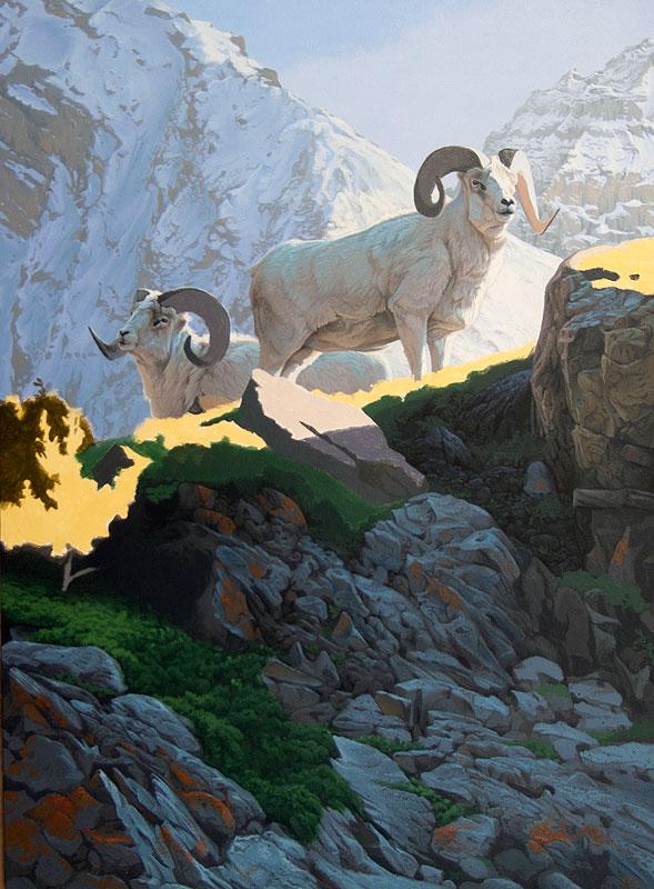 Dalls Sheep progress